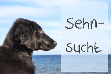 Dog At Ocean, Sehnsucht Means Desire