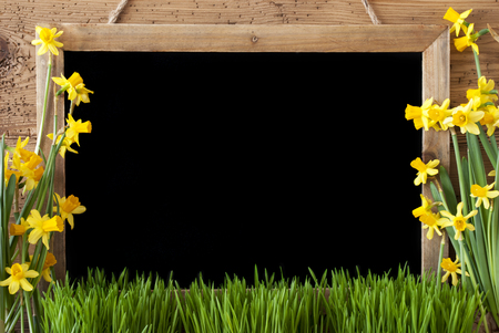 Spring Flower Narcissus, Chalkboard, Copy Space