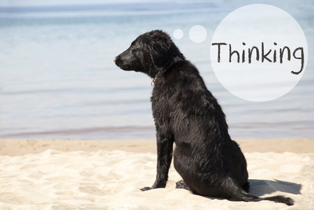 Dog At Sandy Beach, Text Thinking Stock Photo
