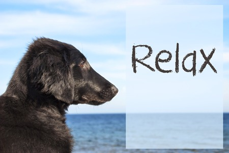 Dog At Ocean, Text Relax