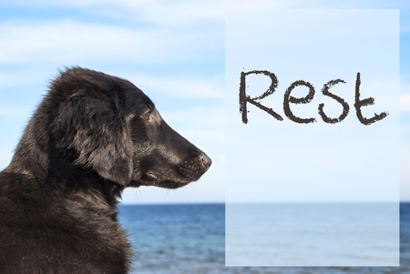 Dog At Ocean, Text Rest
