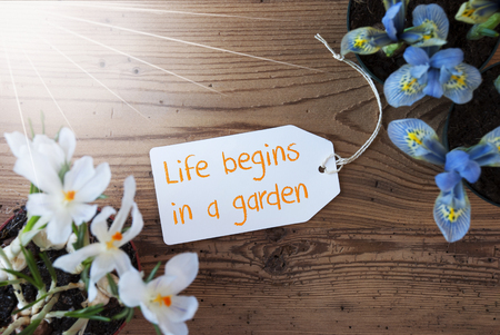 Sunny Flowers, Label, Text Life Begins In A Garden