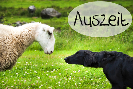 Dog Meets Sheep, Auszeit Means Downtime 版權商用圖片