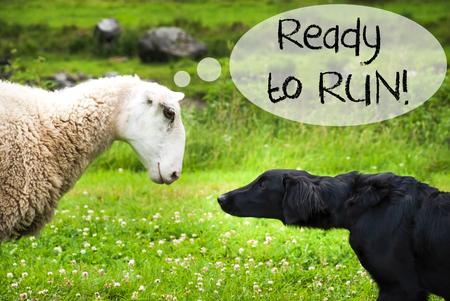 Dog Meets Sheep, Text Ready To Run