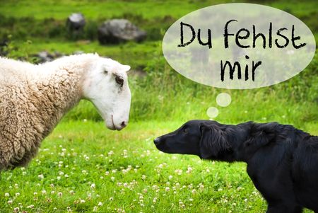 Dog Meets Sheep, Du Fehlst Mir Means I Miss You