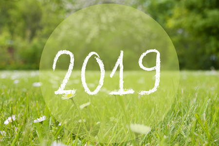 Green Grass Meadow, White Daisy Flowers, Text 2019 Stock Photo