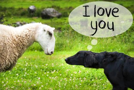 Dog Meets Sheep, Text I Love You Stock Photo
