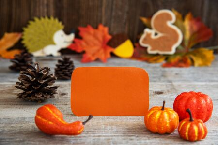 Label With Autumn Decoration, Copy Space, Leaves, Pumpkin Imagens - 130686989