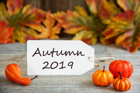 Label With Text Autumn 2019, Pumpkin And Leaves Imagens