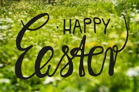 English Calligraphy Happy Easter. Beautiful Scenery Of Daisy And Yellow Flower Meadow In Spring Season. Green Grass Background Or Texture Imagens