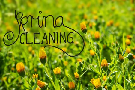 English Calligraphy Spring Cleaning. Beautiful Scenery Of Daisy Flower Meadow In Spring Season. Green Grass Background Or Texture