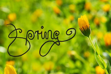 English Calligraphy Spring. Beautiful Scene Of Yellow Spring Flower Meadow In Spring Season.