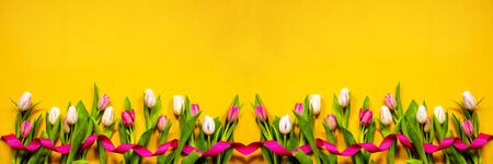 Colorful Banner Of Tulip Spring Flowers. Yellow And Pink Blossoms With Pink Ribbon. Yellow Wooden Background Imagens