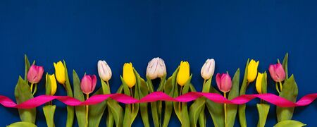 Colorful Banner Of Tulip Spring Flowers. Yellow And Pink Blossoms With Pink Ribbon. Blue Wooden Background