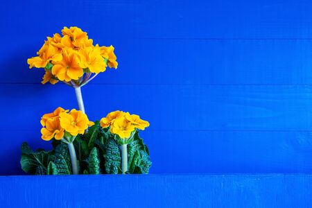 Bouquet Of Yellow Spring Flowers. Copy Space For Your Text Here. Blue Wooden Background