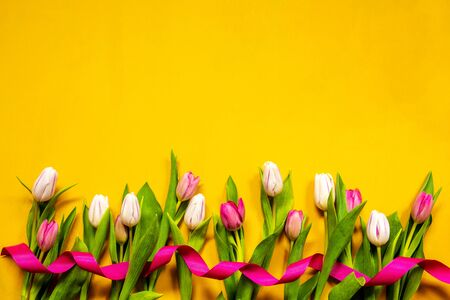 Yellow And Pink Tulip Spring Flowers, Ribbon, Yellow Background Imagens