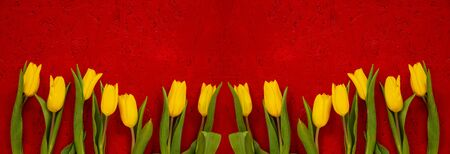 Banner Of Yellow Tulip Spring Flowers. Yellow Blossoms Infront Of Red Wooden Background