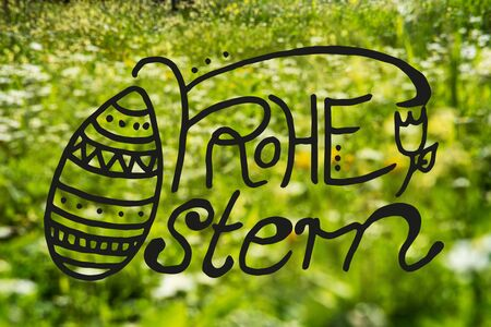 German Calligraphy Frohe Ostern Means Happy Easter. Beautiful Scenery Of Daisy And Yellow Flower Meadow In Spring Season. Green Grass Background Or Texture