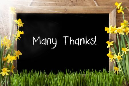 Blackboard With English Text Many Thanks. Sunny Spring Flowers Nacissus Or Daffodil With Grass. Rustic Aged Wooden Background. Imagens