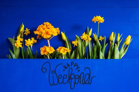 English Text Happy Weekend. Yellow Beautiful Spring Flowers Like Tulip And Narcissus. Blue Wooden Background
