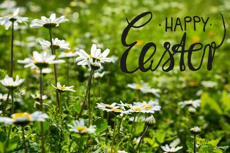 English Calligraphy Happy Easter. Beautiful Scenery Of Daisy Flower Meadow In Spring Season. Green Grass Background Or Texture