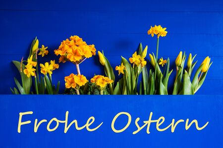 German Text Frohe Ostern Means Happy Easter. Yellow Beautiful Spring Flowers Like Tulip And Narcissus. Blue Wooden Background