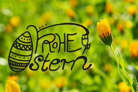 German Calligraphy Frohe Ostern Means Happy Easter. Beautiful Scene Of Yellow Spring Flower Meadow In Spring Season.