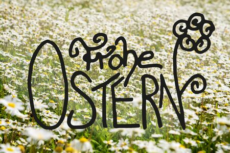 German Calligraphy Frohe Ostern Means Happy Easter. Beautiful Scenery Of Sunny, White Daisy Flower Meadow In Spring Season. Imagens