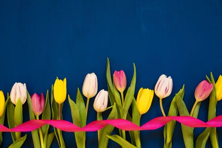 White And Pink Tulip Spring Flowers With Ribbon. Blue Wooden Background With Copy Space