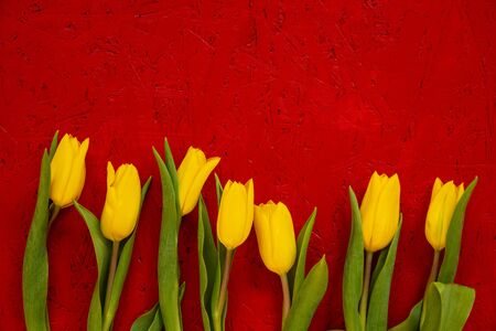 Yellow Tulip Spring Flowers. Yellow Blossoms Infront Of Red Wooden Background