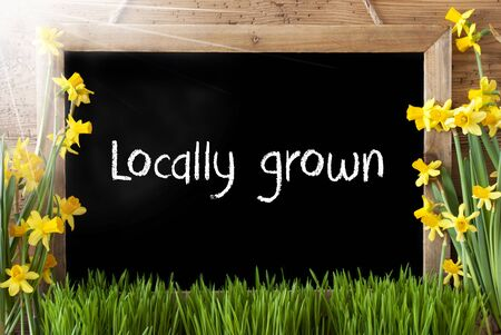 Blackboard With English Text Locally Grown. Sunny Spring Flowers Nacissus Or Daffodil With Grass. Rustic Aged Wooden Background.