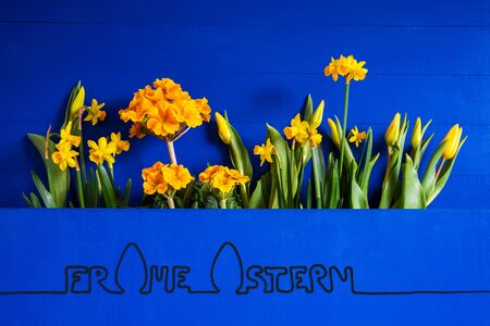 German Calligraphy Frohe Ostern Means Happy Easter. Yellow Beautiful Spring Flowers Like Tulip And Narcissus. Blue Wooden Background