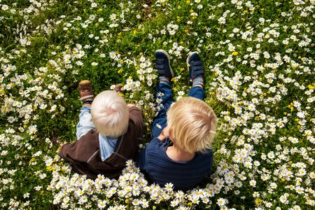 Two Blond Boys Sitting In Daisy Flower Meadow. Top View From Above. Spring Season Or Summer Time