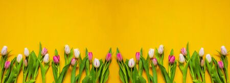 Colorful Banner Of Tulip Spring Flowers. Yellow And Pink Blossoms. Yellow Wooden Background