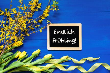 Blackboard With German Text Endlich Fruehling Means Hello Spring. Yellow Spring Flowers Like Tulip And Branches. Festive Decoration With Ribbon. Blue Wooden Background