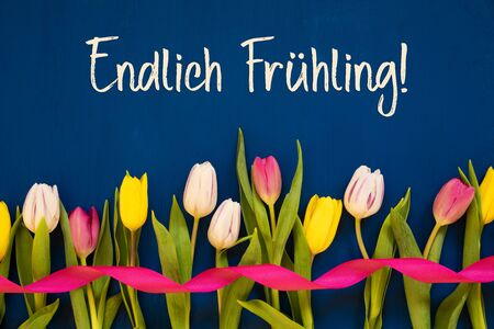 German Text Endlich Fruehling Means Finally Spring. White And Pink Tulip Spring Flowers With Ribbon. Blue Wooden Background