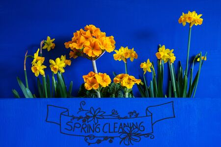 English Calligraphy Spring Cleaning. Yellow Beautiful Spring Flowers Like Narcissus. Blue Wooden Background