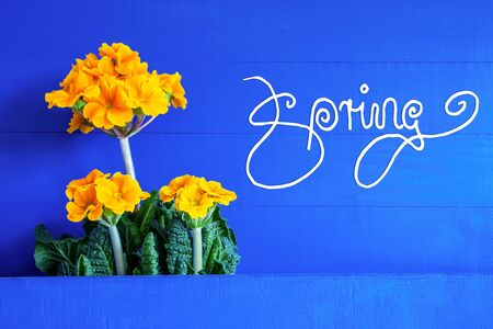 English Calligraphy Spring. Yellow Beautiful Spring Flowers. Blue Wooden Background