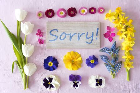 Flat Lay With Spring Flower Blossoms, Sign, Text Sorry