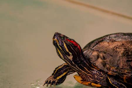 Close up from a fantastic colored turtle Archivio Fotografico - 117833795