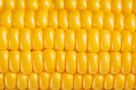 espiga de trigo: fondo de ma�z, cerca de macro