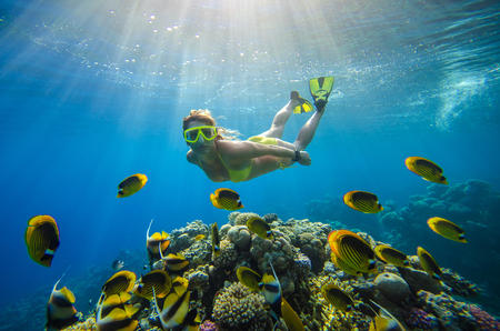 girl dives in a tropical sea with corals and fish