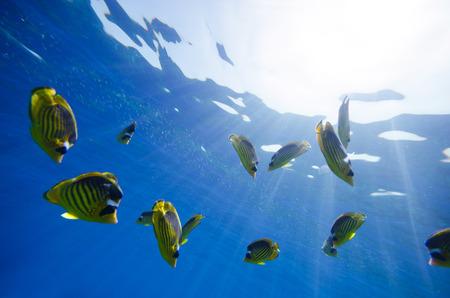 Résumé fond bleu marine profondes Banque d'images - 34784418
