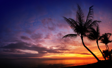 palm trees silhouette: Sunset over the sea with tropical palm trees silhouette, sky background