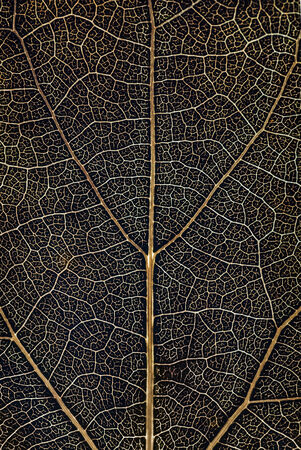 leaf pattern. abstract texture background