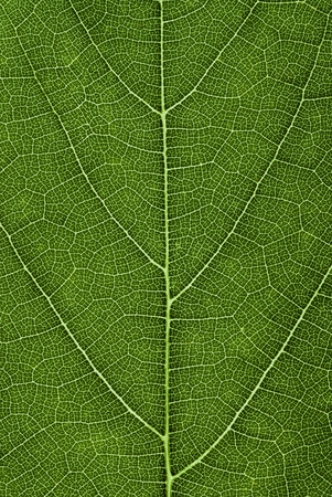 green leaf pattern. abstract texture background