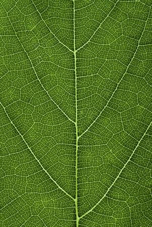 녹색 잎 패턴입니다. 추상 질감 배경