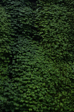 green wall in the rain forest Stock Photo