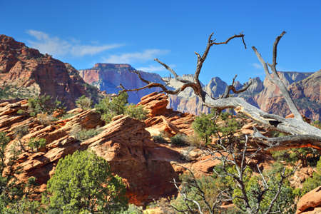 Scenic Zion Park Scenic Landscapes Stock Photo