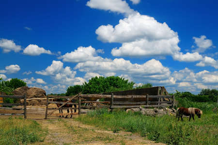 horse farm - business Stock Photo